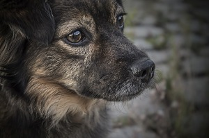 dogs-1150013_640