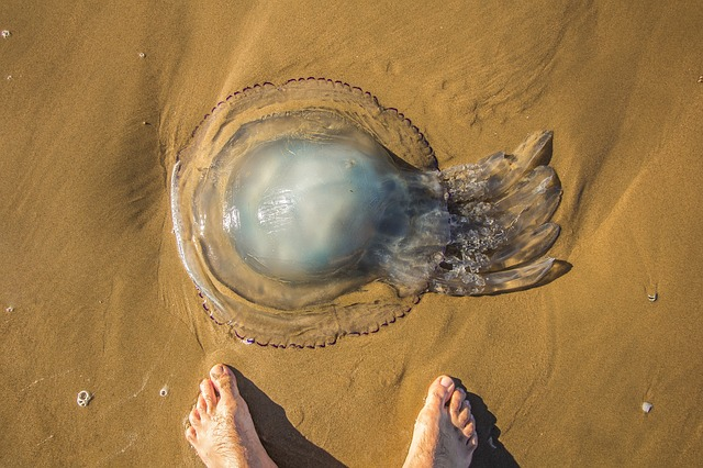 jellyfish-1927210_640