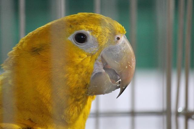 parrot-390793_640