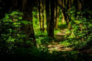 trail-2347138_640